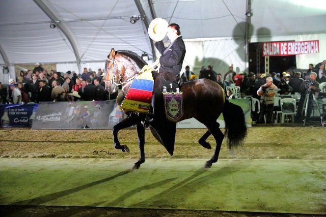 Novedoso el quintuple campeon nacional se impulso en el trote y el galope en agroexpo 2015