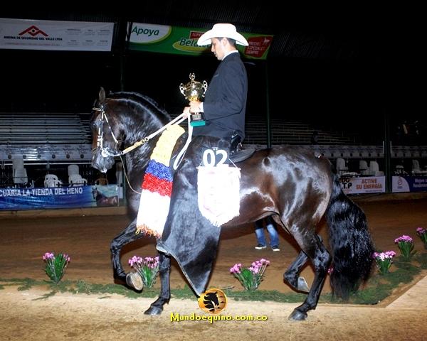 Gran Campeón Reservado Imponente De La Virginia (Constante De La Luisa  X Yunta De Santa Gertrudis T.E.). Buen caballo de un trote muy suave con un galope cadencioso en alza. Felicitaciones al criadero la Virginia, Jorge Bentacourt y equipo de trabajo