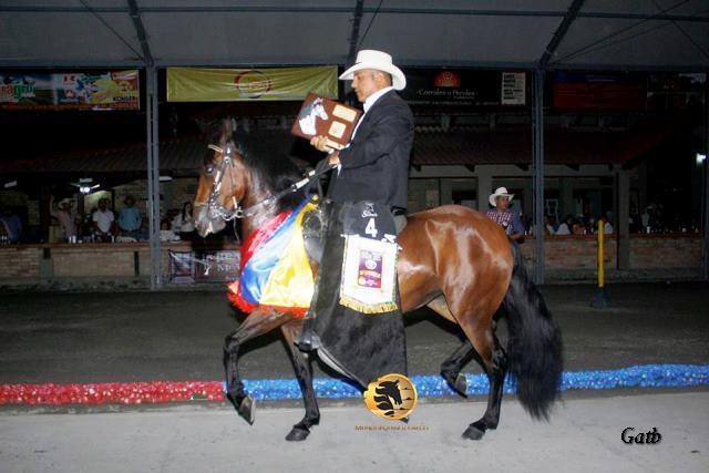 la gran campeona de la trocha colombiana de la exposición equina grado A Popayan, Mayo 22/2016. Galilea de laPerla (Cacique de la Leyenda x Truca) Abuelo Materno Faraón de Gran Dinastía