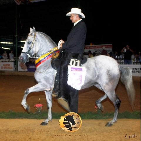 Gran Campeona Quisquella De La Ceiba (Gallardo De Providencia X Centella De La Ceiba)