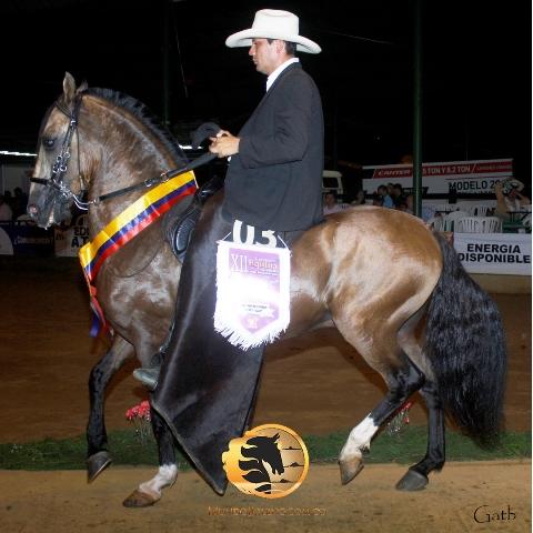 Falcao De Rancho Viejo (Renegado De Las Leyendas X Sofía De Rancho Viejo)