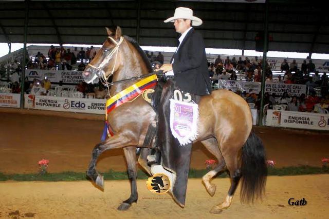 Gala De Cartagena (Aarón (Fc) X Chaquira De Cartagena)