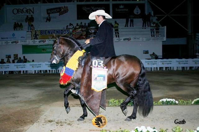 Gran Campeón  Travieso del Jazmin (Aaron FC x Seductora) Abuelo materno Tango de la Perla