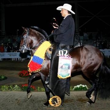 El Gran campeon del trote y el galope en la 61° exposicion equina grado A tulua 2016:Spartacus de Toledito (Cacique de Caramanta FC x Tempestad de las Guacas)
