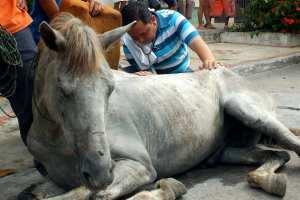 Hay alarma por la muerte de 8 (Ocho) ejemplares equinos y  varios casos humanos sospechosos en donde presentan casos febriles.