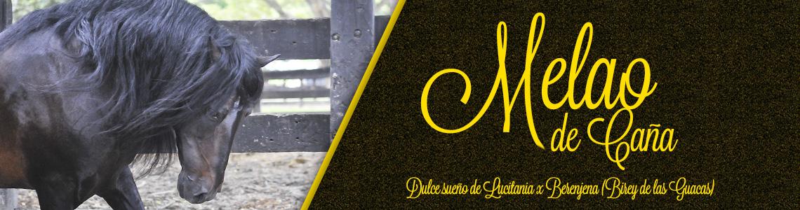 banner-melao-1
