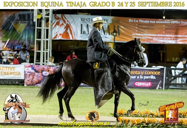 MJ Rey David del Encanto (Imperial de Santa Gertrudis FC x Semejanza de la Luisa - Tartaro del Encuentro)