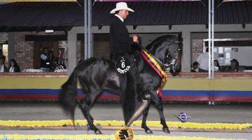 Gran Campeón CDT De La Querencia  (Prestigio De La Querencia X Patria De La Querencia)