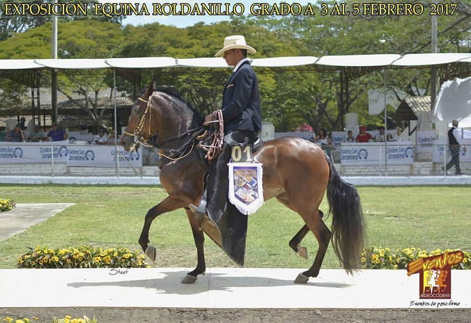 Mejor: Libertad de la Isabela hija de Consul de Gran Dinastia FC x Linda Rosa de la Isabela. Abuelo materno Maracanazo.